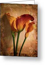 Vintage Calla Lily Greeting Card by Jessica Jenney