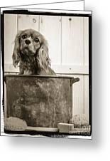 Vintage Puppy Bath Greeting Card by Edward Fielding