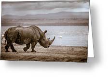Vintage Rhino On The Shore Greeting Card by Mike Gaudaur