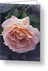 Vintage Rose No. 5 Greeting Card by Richard Cummings
