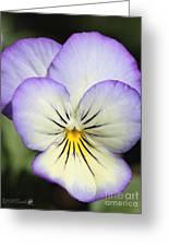 Viola Named Sorbet Lemon Blueberry Swirl Greeting Card by J McCombie