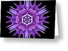 Violet Chrysanthemum Iv Flower Mandala Greeting Card by David J Bookbinder