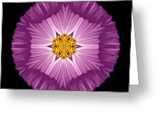 Violet Cosmos II Flower Mandala Greeting Card by David J Bookbinder