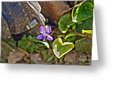 Violet In The Rust Greeting Card by Crystal Harman
