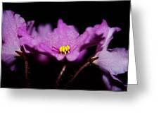 Violet Prayers Greeting Card by Lisa Knechtel