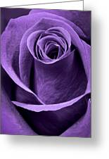 Violet Rose Greeting Card by Adam Romanowicz