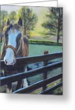Virginia Horse Farm Morning Greeting Card by Donna Tuten
