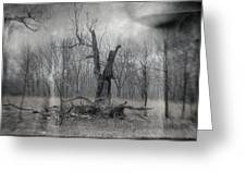 Visitor In The Woods Greeting Card by Jim Shackett