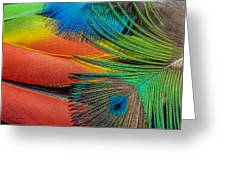 Vivid Colored Feathers Greeting Card by Jeff Swanson