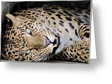 Voodoo The Leopard Greeting Card by Keith Stokes