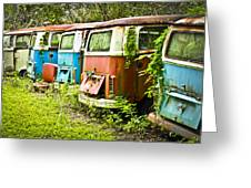 VW Buses Greeting Card by Carolyn Marshall