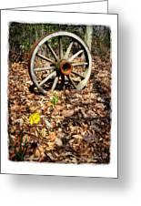 Wagon Wheel Daffodil Greeting Card by Brian Wallace