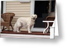 Waiting By The Door For You Greeting Card by John Rizzuto
