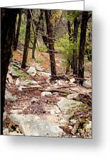 Walk In The Woods Greeting Card by Barbara Shallue