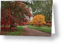 Walk Through The Colours.  Greeting Card by Shirley Mitchell