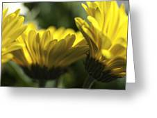Wall Flowers Greeting Card by Fran Riley