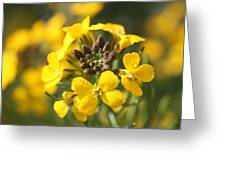 Wallflowers Greeting Card by Mark Severn