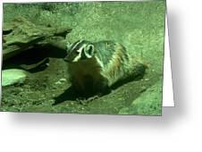 Wandering Badger Greeting Card by Jeff Swan
