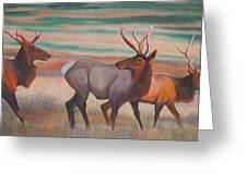 Wapiti  In Sunset Glow Greeting Card by Anastasia Savage Ealy