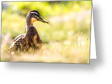 Warm Summer Morning And A Duck Greeting Card by Bob Orsillo