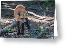 Wary Fox Greeting Card by Bianca Nadeau