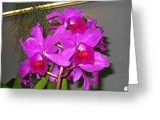 Washington Dc - Us Botanic Garden. - 121212 Greeting Card by DC Photographer