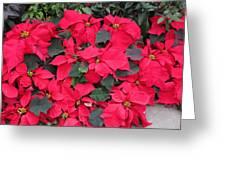 Washington Dc - Us Botanic Garden. - 12128 Greeting Card by DC Photographer