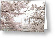 Washington Monument - Cherry Blossoms - Washington Dc - 011343 Greeting Card by DC Photographer