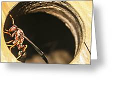 Wasp Greeting Card by Steven  Taylor