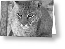 Watchful Eyes Black And White Greeting Card by Jennifer  King