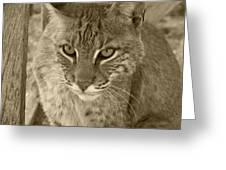 Watchful Eyes-sepia Greeting Card by Jennifer  King