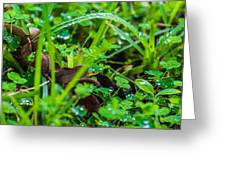 Water Drops On The  Grass 0052 Greeting Card by Terrence Downing