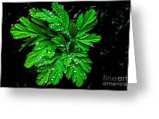 Water Drops Greeting Card by Robert Bales