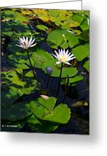 Water Garden I Greeting Card by Calvin Humble