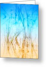 Water Grass - Outer Banks Greeting Card by Dan Carmichael
