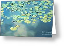 Water Lilies Greeting Card by Darren Fisher