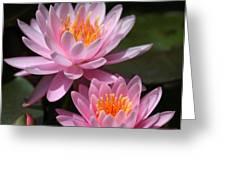 Water Lilies Love the Sun Greeting Card by Sabrina L Ryan