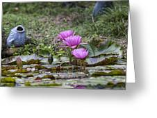 Water Lilly Trio Greeting Card by Charles Warren