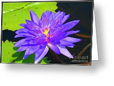Water Lily Beauty Greeting Card by Photographic Art and Design by Dora Sofia Caputo