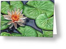 Water Lily Greeting Card by David Stribbling