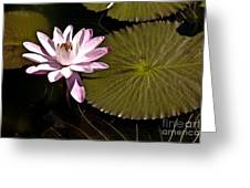 Water Lily Greeting Card by Heiko Koehrer-Wagner