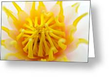 Water Lily Greeting Card by RM Vera