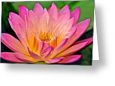 Water Lily Greeting Card by Frozen in Time Fine Art Photography
