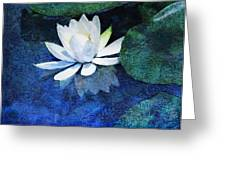 Water Lily Two Greeting Card by Ann Powell