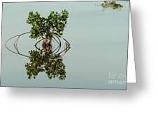 Water Pond  Greeting Card by Javier Correa