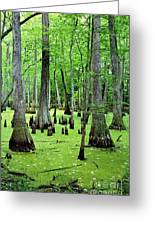 Water Tupelo And Bald Cypress Trees In Swamp On The Natchez Trace Parkway Jackson Mississippi Usa Greeting Card by David Lyons