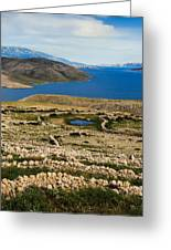 Watering Place Greeting Card by Davorin Mance