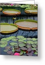 Waterlilies And Platters 2 Greeting Card by Byron Varvarigos