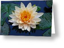 Waterlily After A Shower Greeting Card by Raymond Salani III