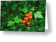 Wax Cap Fungi Greeting Card by Jeff Lepore